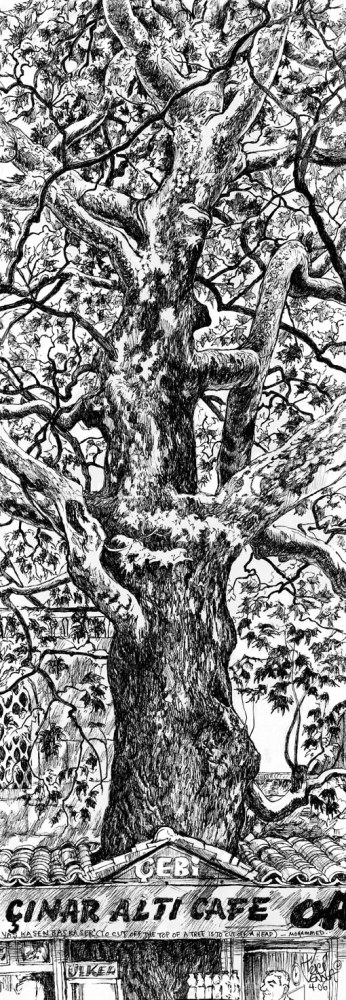 GEZI PARK: Drawing Trees in Istanbul (1/6)